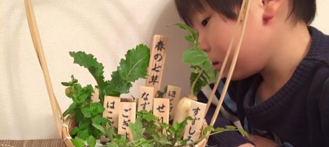 子どもと一緒に「春の七草」を覚えましょう