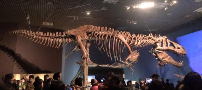 肉食恐竜の二大スターが登場! 会場限定おすすめ土産とは?