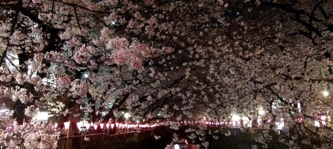 お花見だけじゃもったいない! 桜の花びらで押し花しおりを作ろう